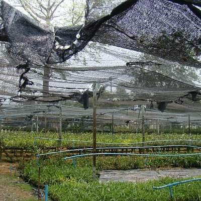 Roof above plants