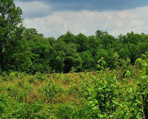 May Prairie near Machester, Tennessee
