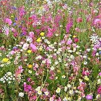 Field of Dreams, South Petherton