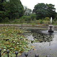 The restored lilly pond in the country park