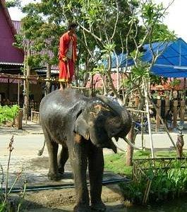 Pang Chang Ayothaya Elephant village