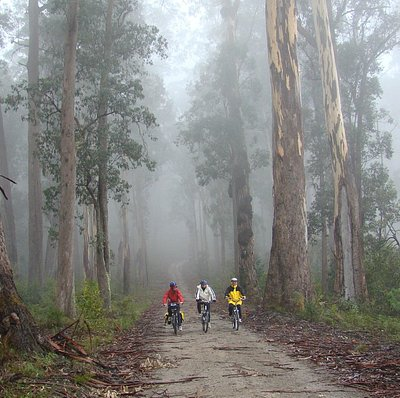 Misty trees, Snowy River NP