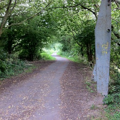 SAFE cycling bliss on the Cuckoo Trail in East Sussex