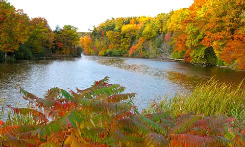 Fall Foliage by Durand Pond