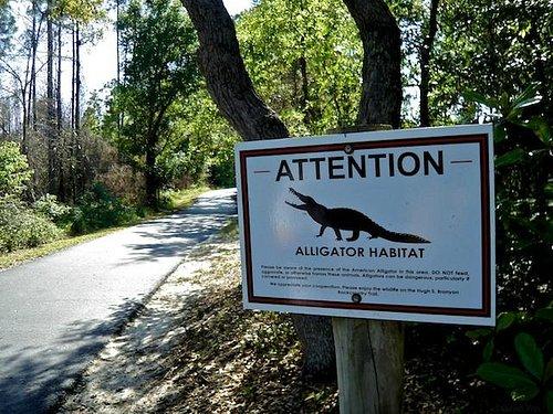 You might even encounter an alligator