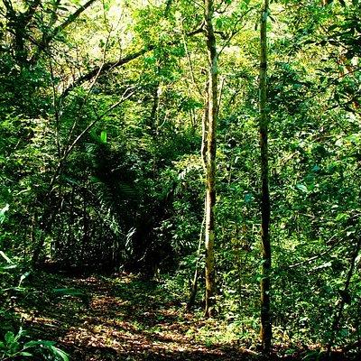 along the trail: shade, beauty, fragrant air.
