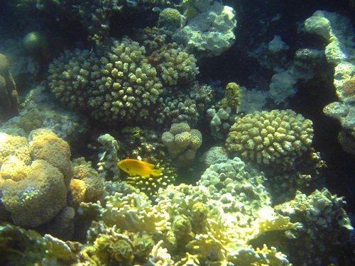various corals