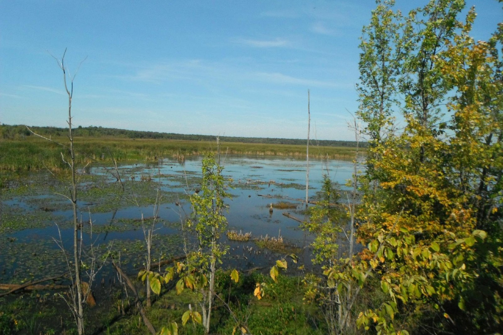 view from the lookout over the marsh