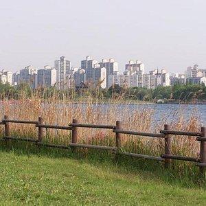 경기도 고양시 일산호수공원! 아파트와 잘 어우러져있다.