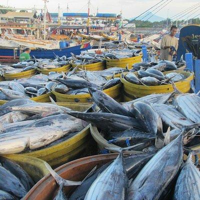 マグロ以外の魚も水揚げしています。