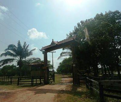 Fazenda São Jerônimo - Soure - Ilha de Marajó - PA