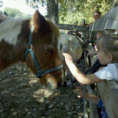 Petting the ponies..on certain days kids can also ride them