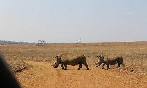 Rhinos @ Rietvlei