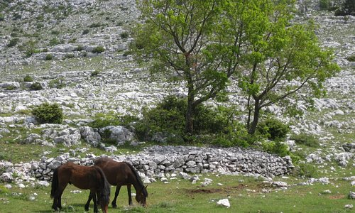 8 of 13 Loose domesticated horses near road