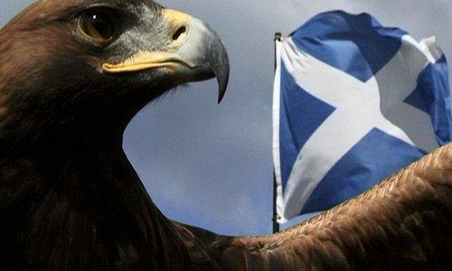 The Scottish Eagle