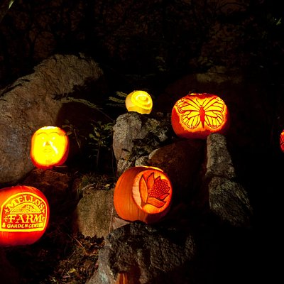 The Annual Ballard Park Pumpkin Tour happens every October