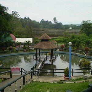 Fish pond with rice paddies view