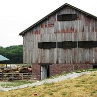 This barn is where all the cows were eating their Sunday brunch.We had ours in the barn next doo