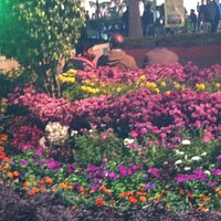 FLOWER BLOOM AT GANDHI UDYAN