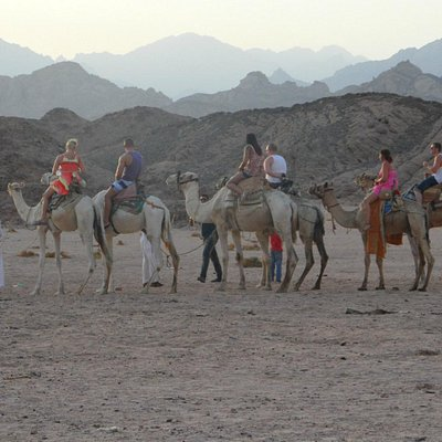 Camel ride to the stargazing and Bedouin village.