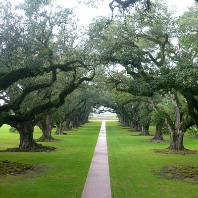 Oak Alley 280 years old