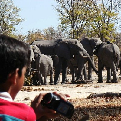 Eathcare Productions, Moremi Game Reserve