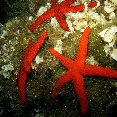 Sifnos Reef