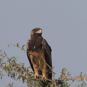 A a Black kite seen by me there,a real beauty but i was a gud distance frm it