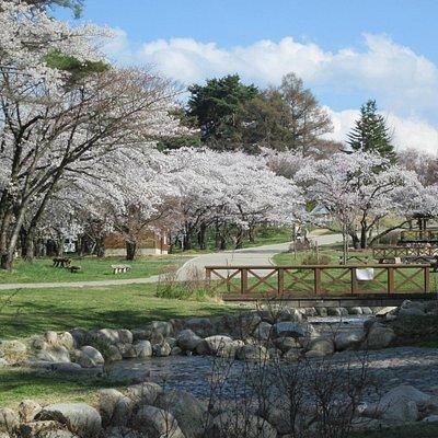 4月末です。市街地で最も遅くに桜満開になるスポット。