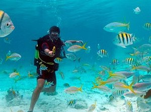this is how it looks to scuba dive in Cuba :)