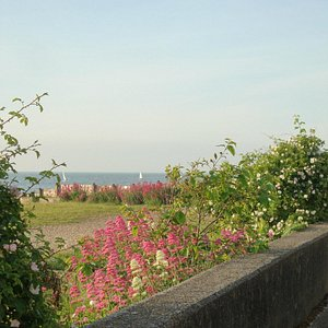 Flowers on West Beach, Whitstable