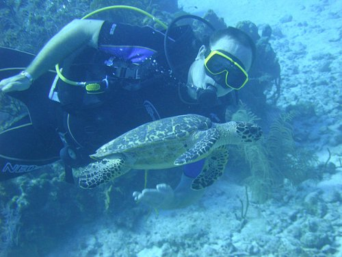 Always lots of turtles to see!