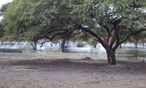El lago Ngami en Botswana - 21 11 2012 11:31 am
