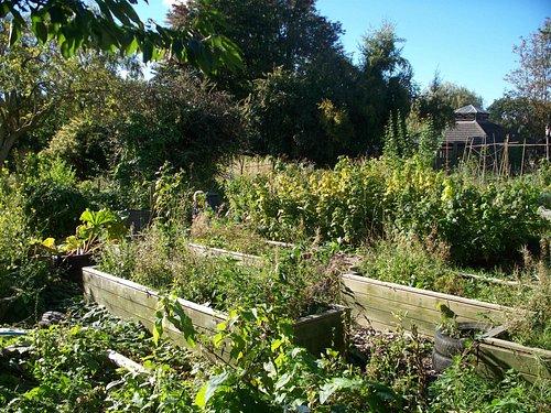 Garden/allotment