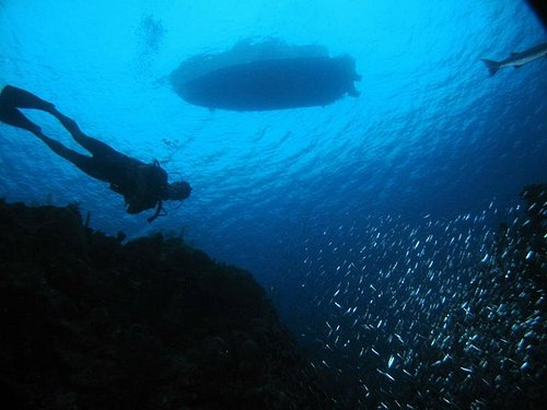 Silversides and Silhouettes