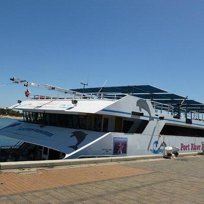 Dolphin Cruises
