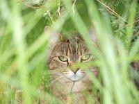 Catsdoormat