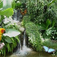 Cascada en el Butterfly Park