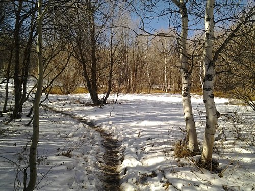 The trail with snow