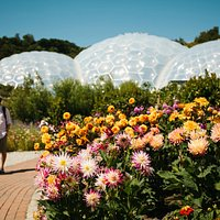 Brilliant summer dahlia display in front of the Biomes