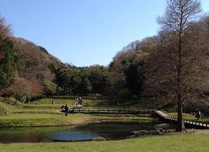 新林公園の池です。