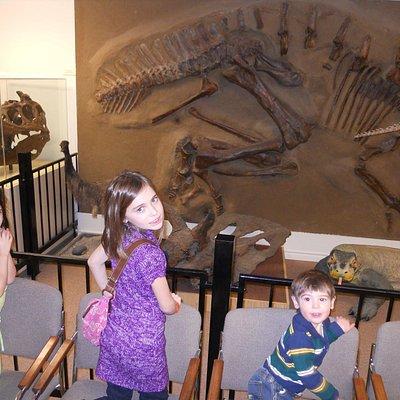 Dino. Exhibit