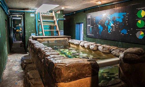 Benthic shark tank