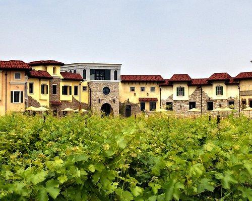 Colaneri Estate Winery through the vineyard