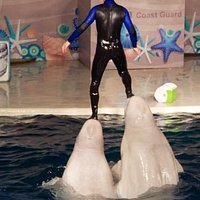 The Beluga Whale Show