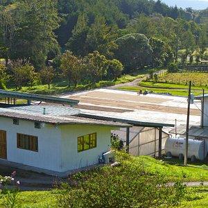 Janson Coffee Processing Plants