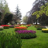Le jardin botanique au printemps