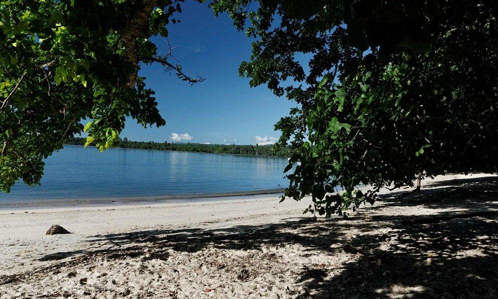 Große Bäume werfen Schatten auf einen Teil des Strands.