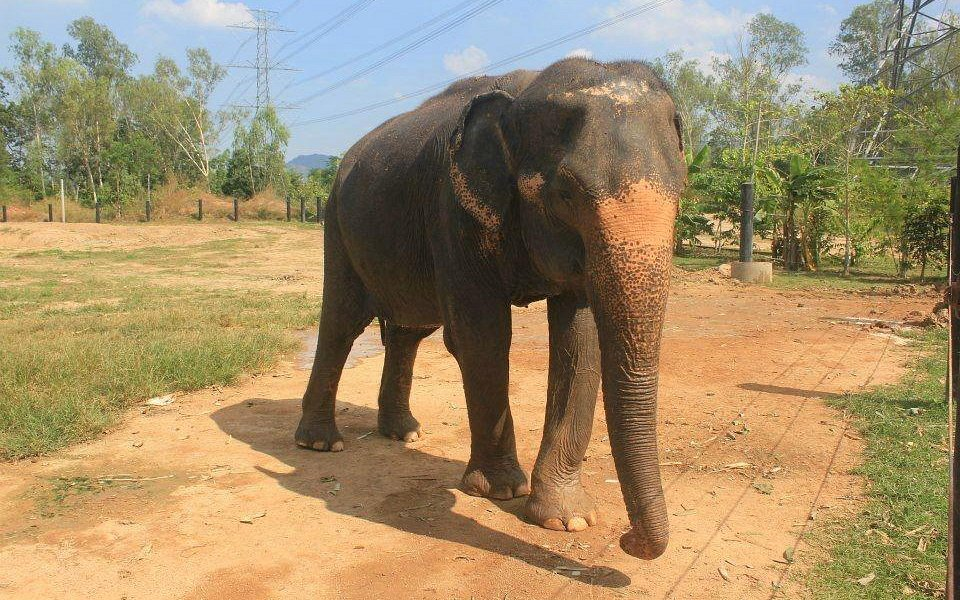 Elephant going on a daily walk