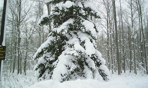 tree full of snow!